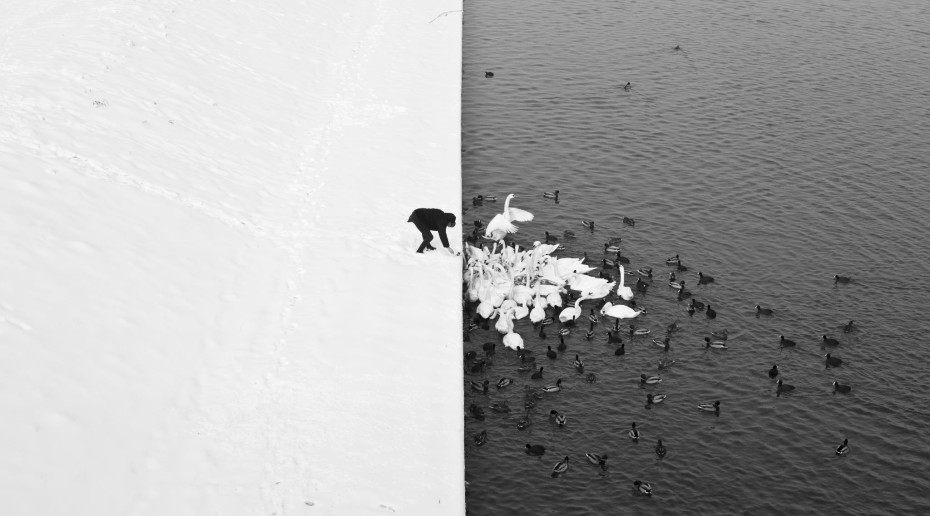 A Man Feeding Swans in the Snow by Marcin Ryczek
