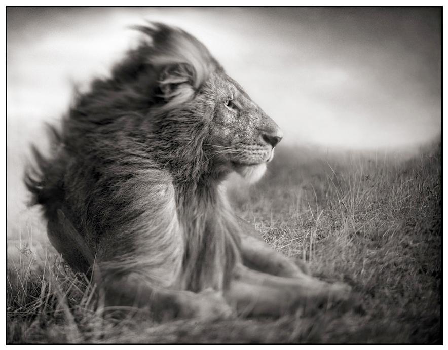 Mesmerizing black white african wildlife photography by nick brandt